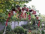Квіткова гірлянда тон кольору марсала., фото 6