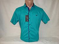 Мужская рубашка с коротким рукавом на кнопках Paul Semih, Турция , фото 1
