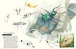 Музей живых насекомых. Ф. Лассер, фото 2