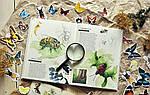 Музей живых насекомых. Ф. Лассер, фото 8
