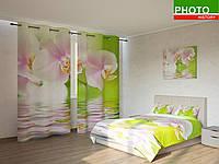 Фотокомплекты орхидея на салатовом фоне