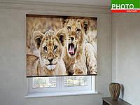 Рулонные шторы с фотопечатью львята