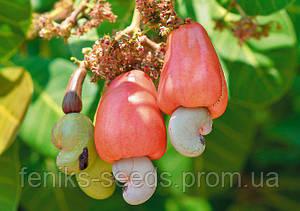 Орех Кешью семена