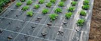 Агроматериал укрывной