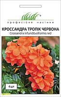 Семена кроссандры Тропик красная, 4шт, Pan American, США, Професійне насіння, до 2018 года