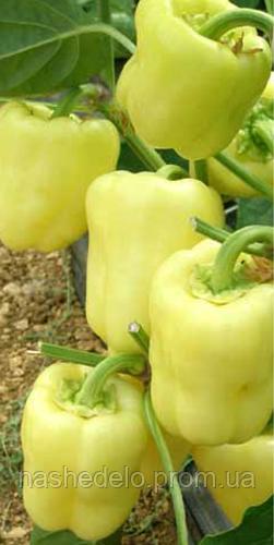 Семена перца сладкого Ведрана F1 250 семян Enza Zaden