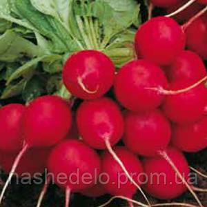 Семена редиса Селеста F1 50000 семян (3-3,25мм) Enza Zaden