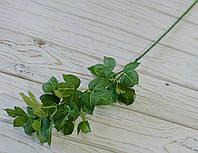 Ветка листьев винограда зеленая