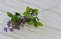 Дополнитель зелень с фиолетовыми ягодками, фото 1