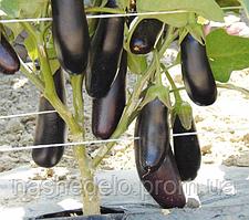 Семена баклажана Дестан F1 10 гр. Enza Zaden