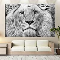 Картина - Фото льва в церно - белом цвете, для декора спальни