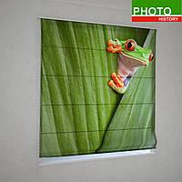 Римские фотошторы любопытная лягушка