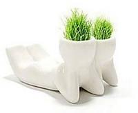 Травянчики двойные бел. / керамический травянчик / hair man plant