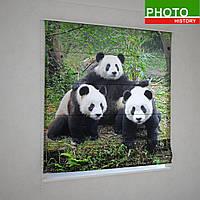 Римские фотошторы мишки панда