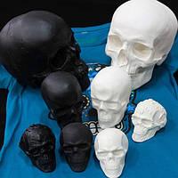 Моделі черепів з гіпсу