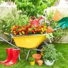 Дача, сад і город