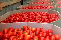 Октабины для овощей различных размеров от производителя, фото 1