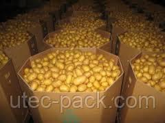 Упаковка для фруктів, ягід і овочів різних розмірів від виробника