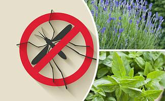Чтобы комары не кусали. 8 натуральных репеллентов, которые защитят вас от москитов