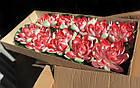 Плавающая декоративная лилия AquaFall диаметр 30 см красная, фото 2