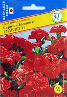 Гвоздика садовая Лилипот Скарлет F1