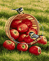 Картина-раскраска Идейка Синички и яблоки Худ Розмари Миллетт (KH2469) 40 х 50 см