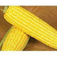 Семена кукурузы Оверленд F1 (100 000 сем.) Syngenta