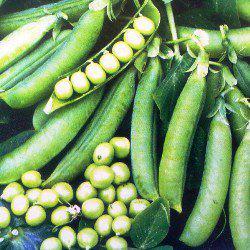 Семена гороха Преладо (100 000 сем.)