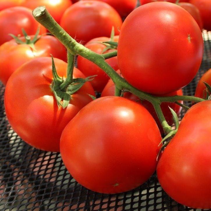 Семена томата Фантастина F1 (500 сем) Syngenta