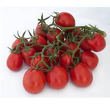 Насіння томату Мицено F1 (2500 сем.) Syngenta