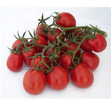 Семена томата Мицено F1 (2500 сем.) Syngenta