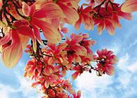 Фото-обои Prestige (Престиж) №47 Сказочные цветы (272*196) 8 листов