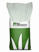 Семена газонной травы DLF Trifolium PLAYGROUND (ДЛФ трифолиум Плейграунд ) 20 кг.