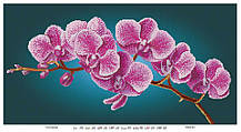 Гілка орхідеї