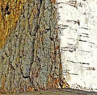 Кора пробкового дуба 100*150мм толщина 5см
