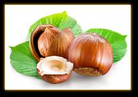 Масло Лесного ореха (фундук)  50 мл / 100 мл / 1 л