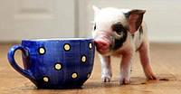 БВМД 15% (откорм свиней от 35 до 70 кг), ЕС