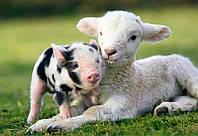 БВМД  10% (откорм свиней от 70 до 120 кг),ЕС