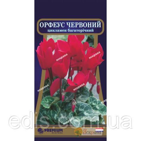 Цикламен персидский Орфеус 5 семян ТМ Яскрава, фото 2