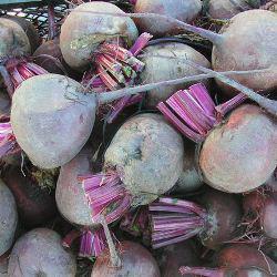 Семена свеклы Нобол, (1 кг)