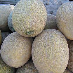 Семена дыни Амал F1 (1000 сем.)