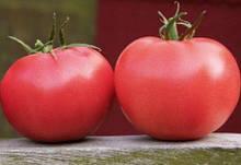 Насіння томату Афен F1 (250 нас.) Clause