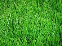 Трава универсальная (Дания) 100г