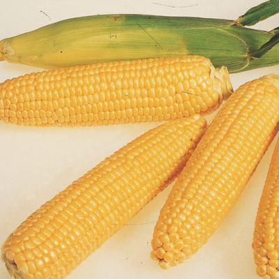 Семена кукурузы сладкой Леженд F1 (1 кг)