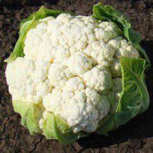 Семена цветной капусты Майбах F1 (1000 сем.) Clause