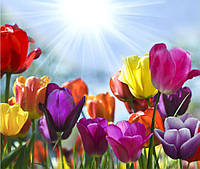 Фотообои тюльпаны цветные