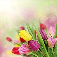 Фотообои тюльпаны букет