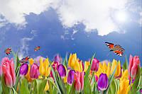 Фотообои тюльпаны поле