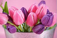Фотообои тюльпаны в ведре
