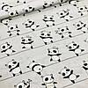 Бязь детская панды на полоске с пудровыми шапочками, коронами и бантиками на сером